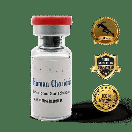 human chorionic